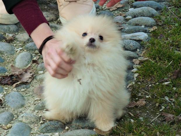 milan-dog
