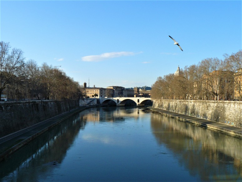 rome-river-and-bird