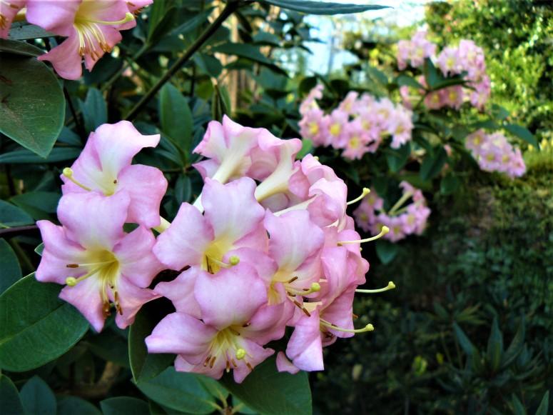 Edinburgh Botanic Gardens Flower