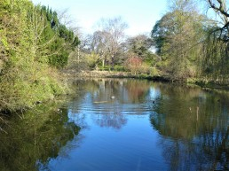 Edinburgh Botanic Gardens pond