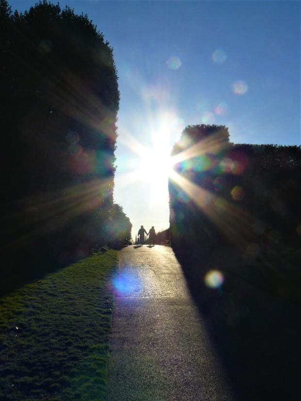 Edinburgh Botanic Gardens silhouette