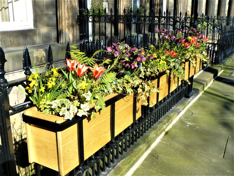 Edinburgh flowers