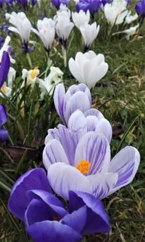 Edinburgh Meadows Flowers