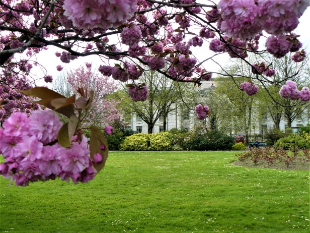 cardiff alexandra gardens blossom