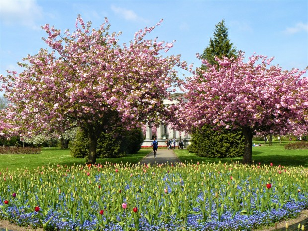 cardiff alexandra gardens