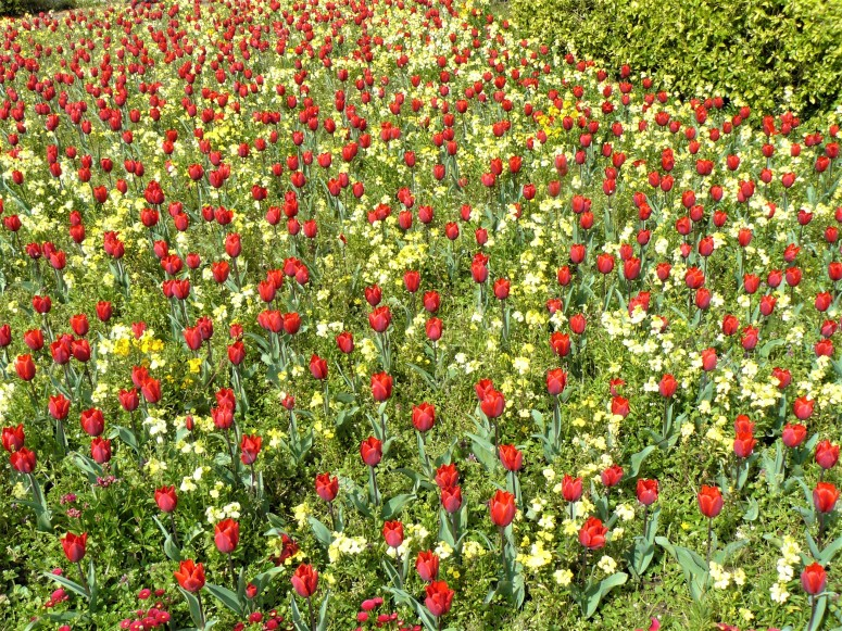 cardiff roath park flowers