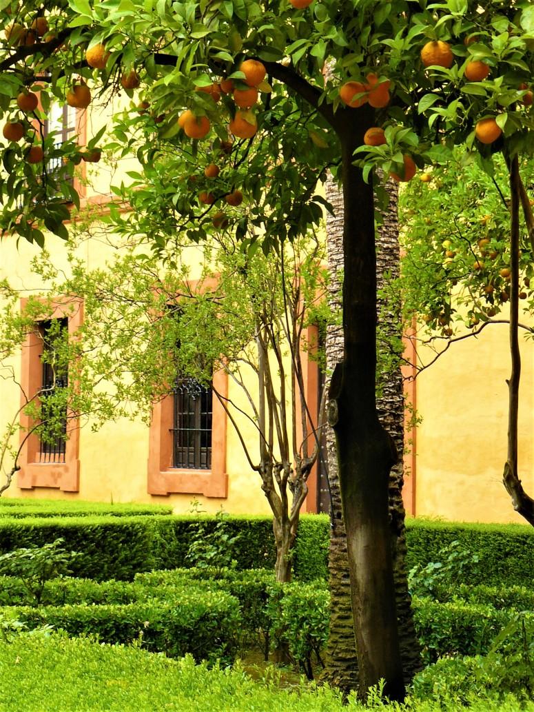 orange sevilla oranges