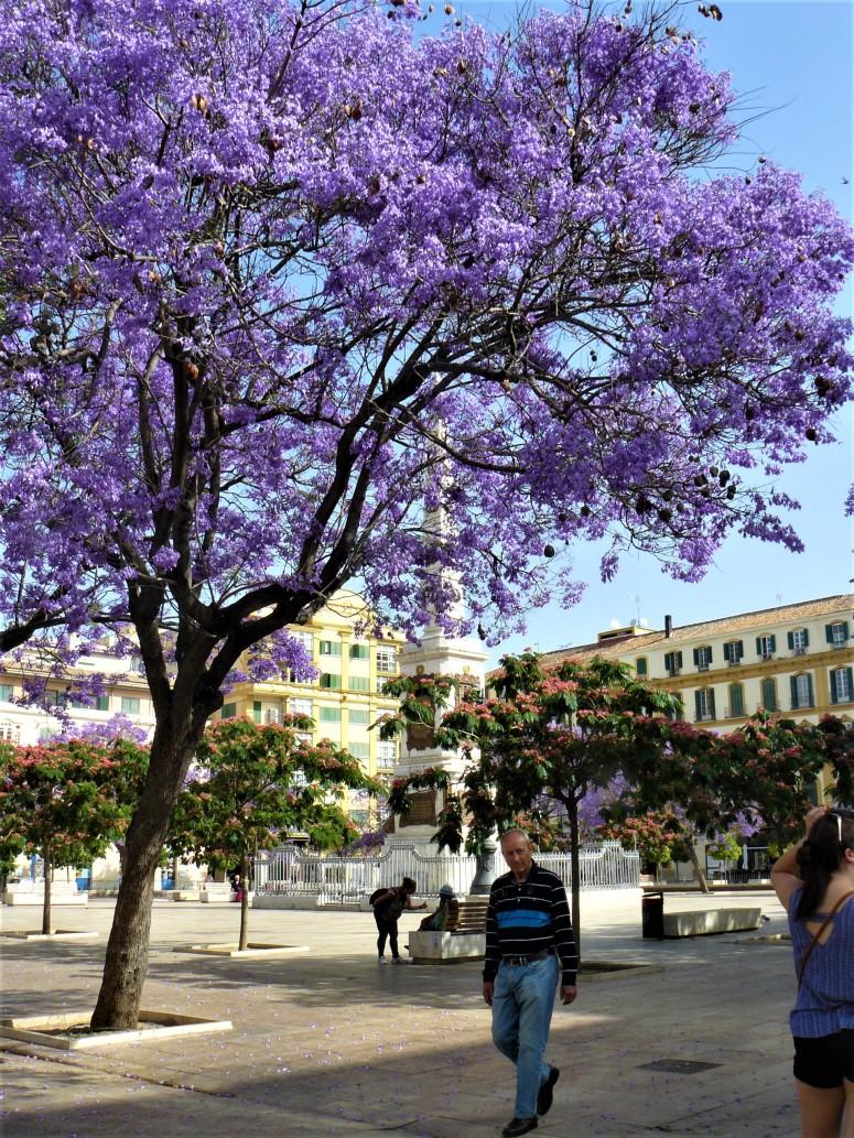 purple malaga blossom