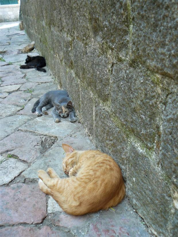 3 montenegro kotor cats