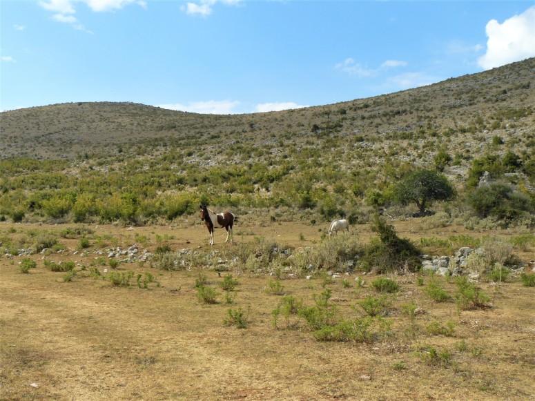 montenegro countryside horses