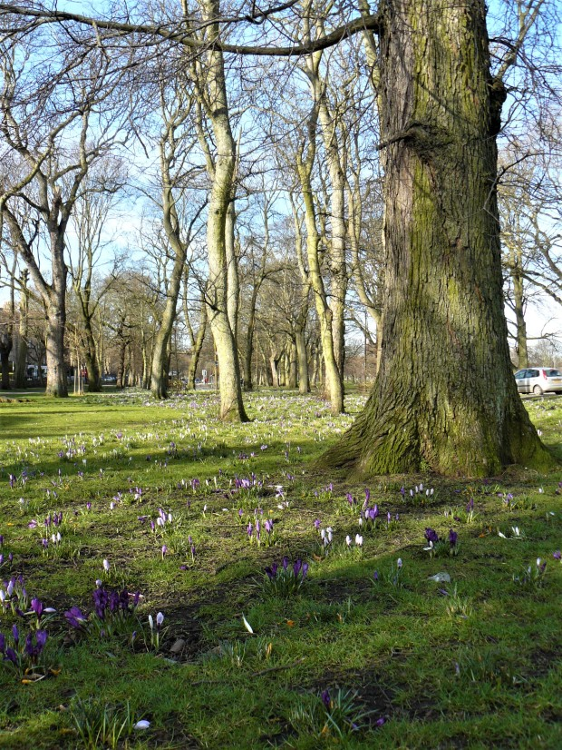 edinburgh spring 5