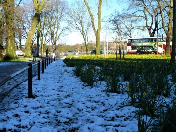 meadows snow 4