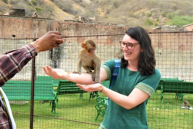 jaipur monkey palace 1