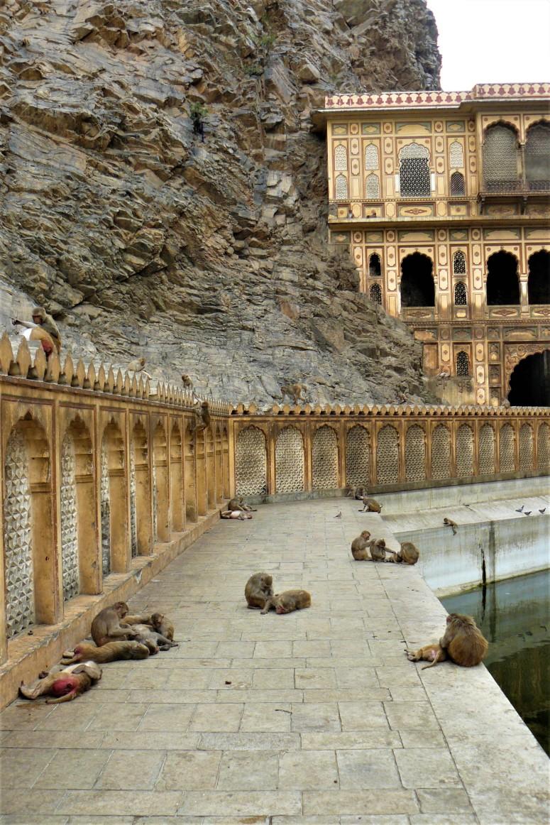 jaipur monkey temple 2
