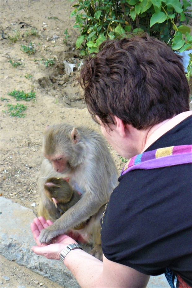 jaipur monkey temple 8