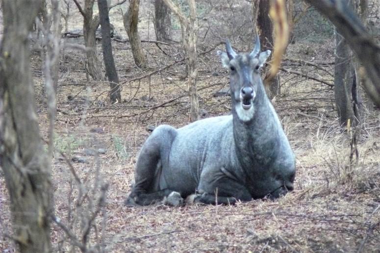 ranthambhore animal 1