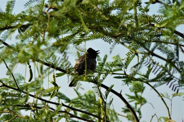ranthambhore bird 1