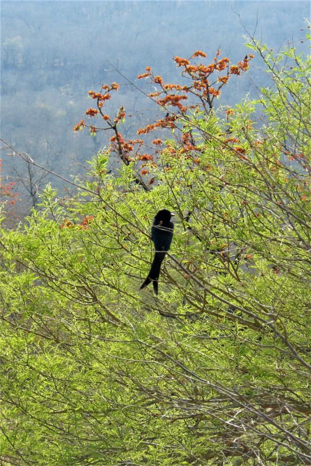 ranthambhore bird 2