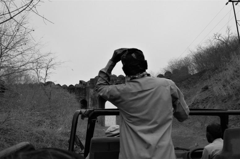 ranthambhore canter safari 1