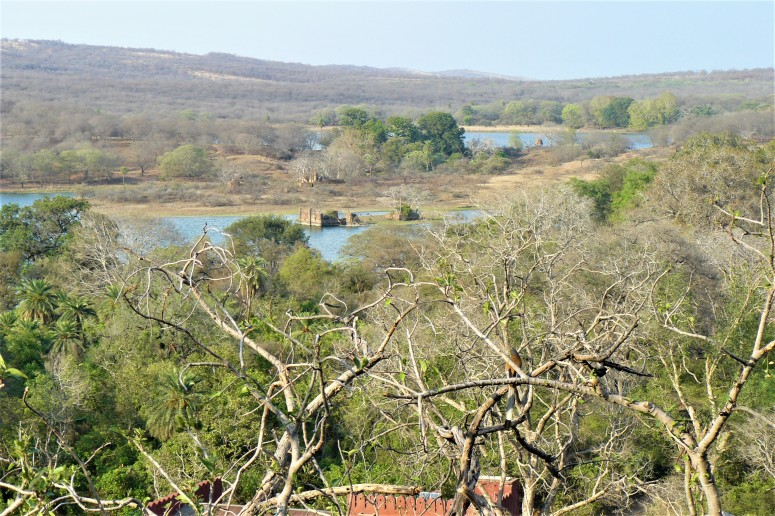 ranthambhore fort 6