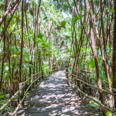 belize rainforest bacab jungle park walkway