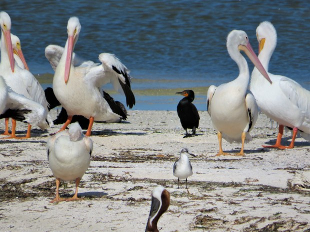 Mexico Isla Holbox 7 Island Trip 2