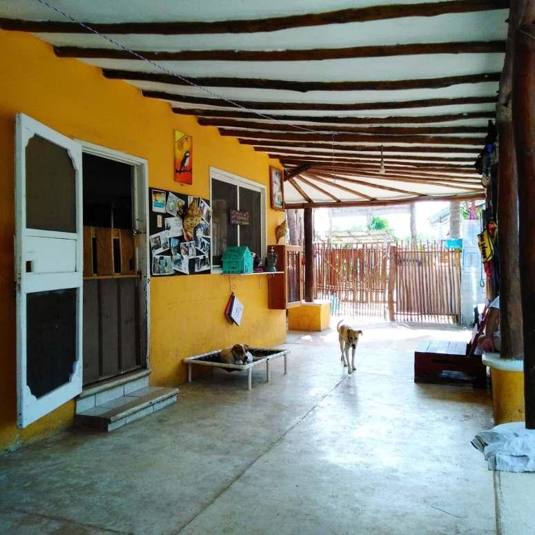 Mexico Isla Holbox Dog Sanctuary 1