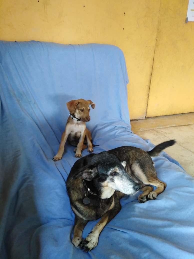 Mexico Isla Holbox Dog Sanctuary 2