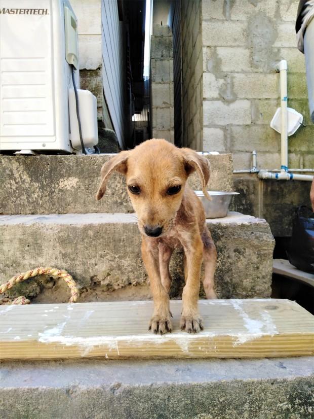 Belize Caye Caulker Animal Shelter 2