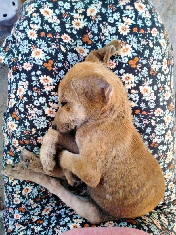 Belize Caye Caulker Animal Shelter 3