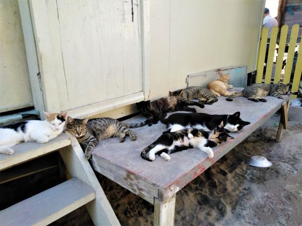 Belize Caye Caulker Animal Shelter 4