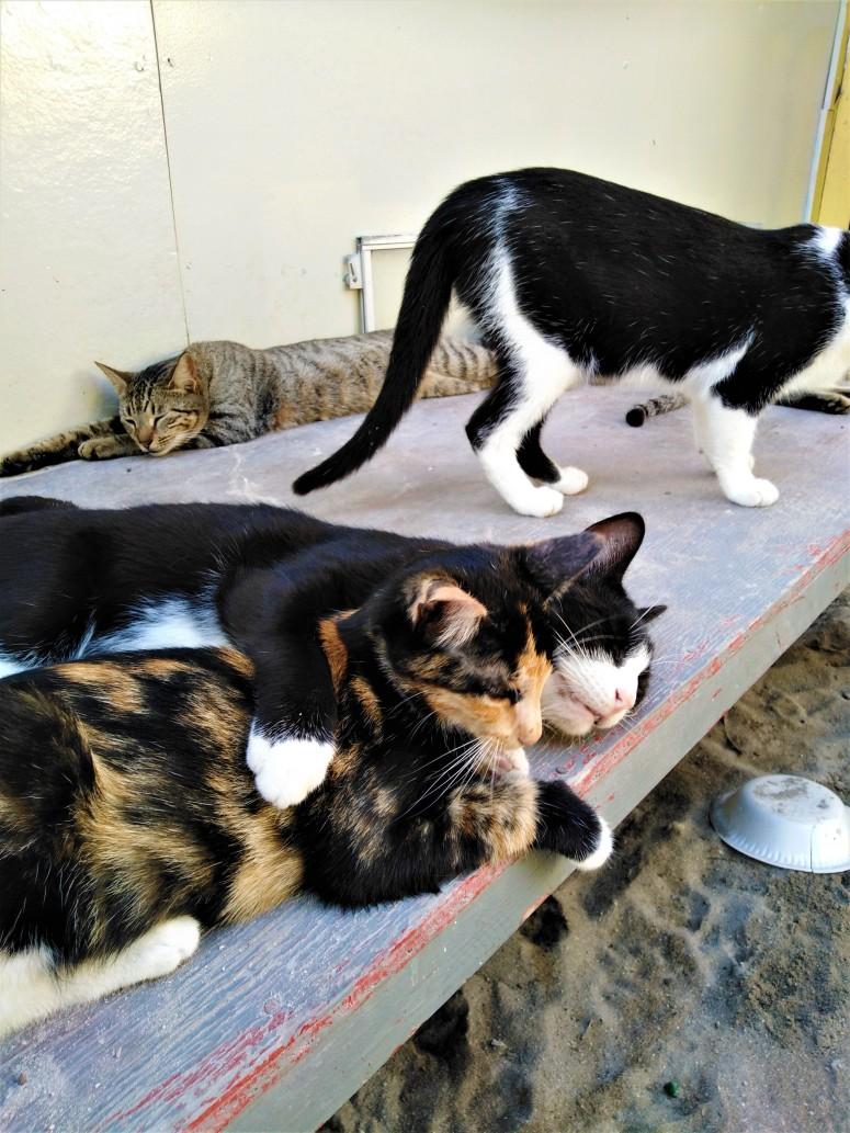 Belize Caye Caulker Animal Shelter 5