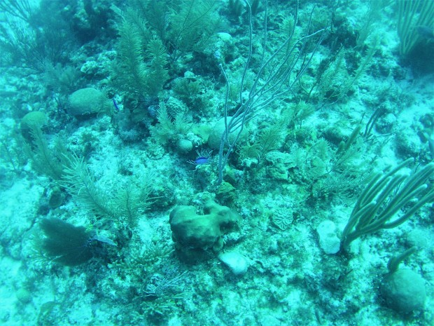 Belize Caye Caulker Diving 12