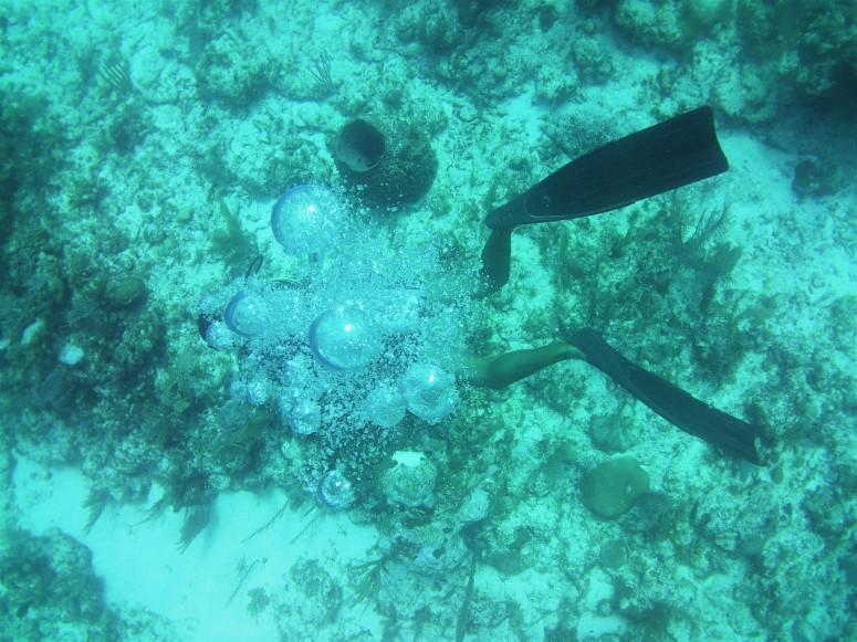 Belize Caye Caulker Diving 24