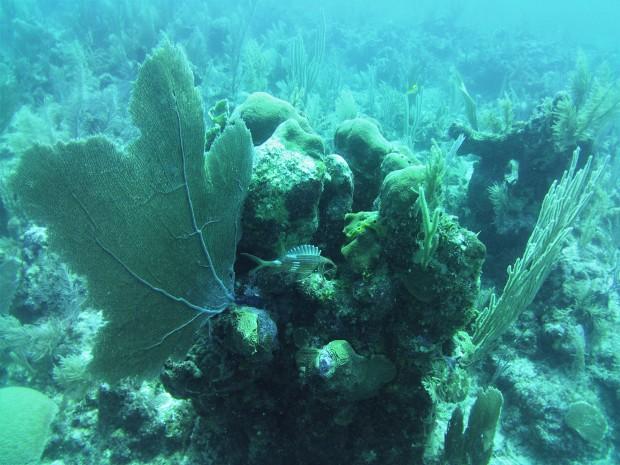 Belize Caye Caulker Diving 25