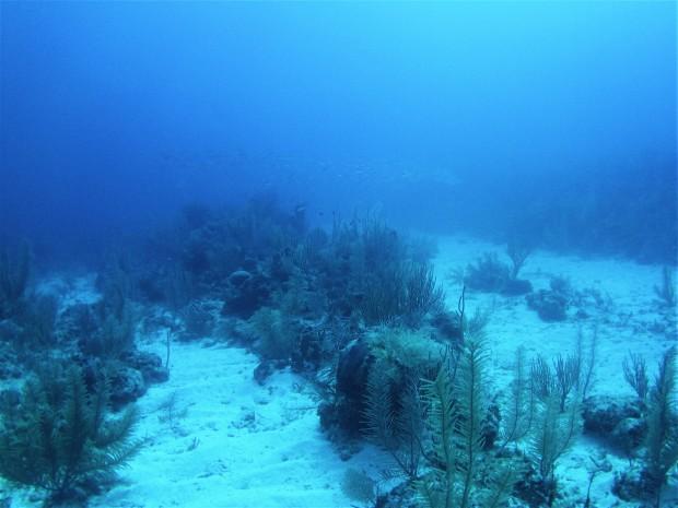 Belize Caye Caulker Diving 7