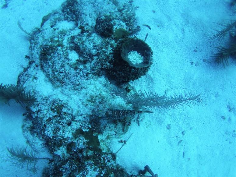 Belize Caye Caulker Diving 9