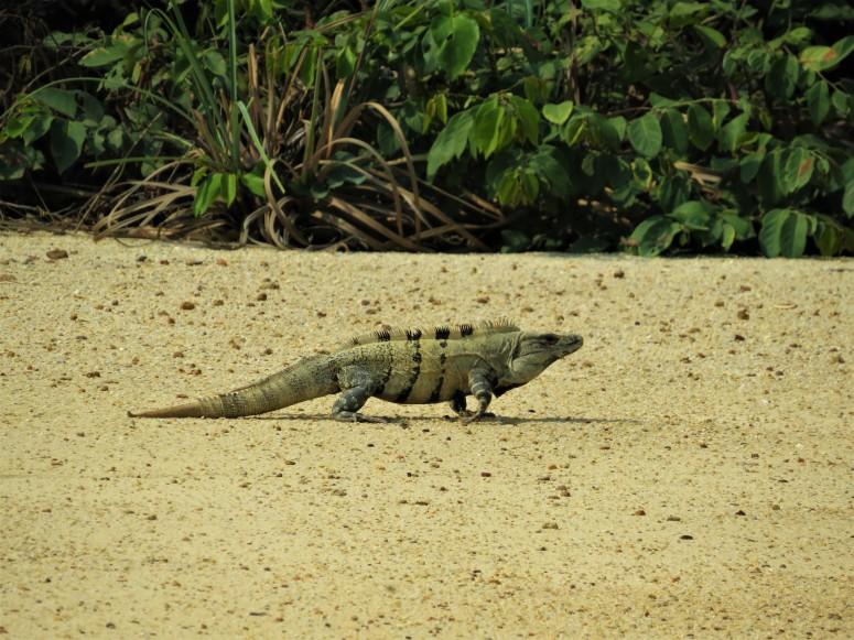 Belize Hopkins River 1