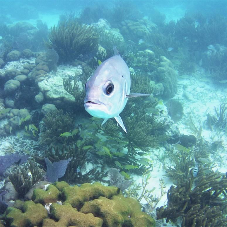 Belize San Pedro Hol Chan 1