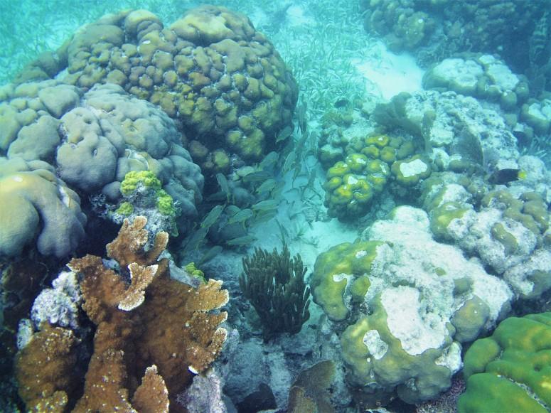 Belize San Pedro Hol Chan 2