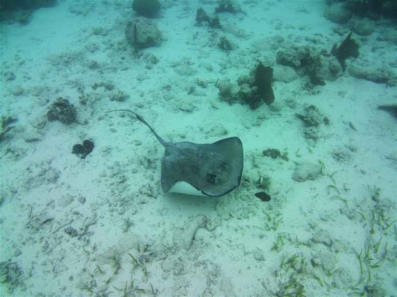 Belize San Pedro Shark Ray Alley 7