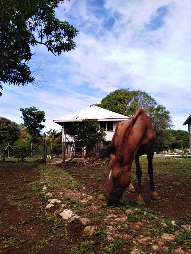 Belize Sarteneja Backpackers Paradise 1