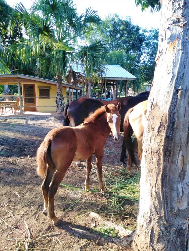 Belize Sarteneja Backpackers Paradise 2