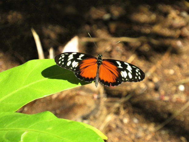 Belize Sarteneja Shipstern Nature Reserve 12