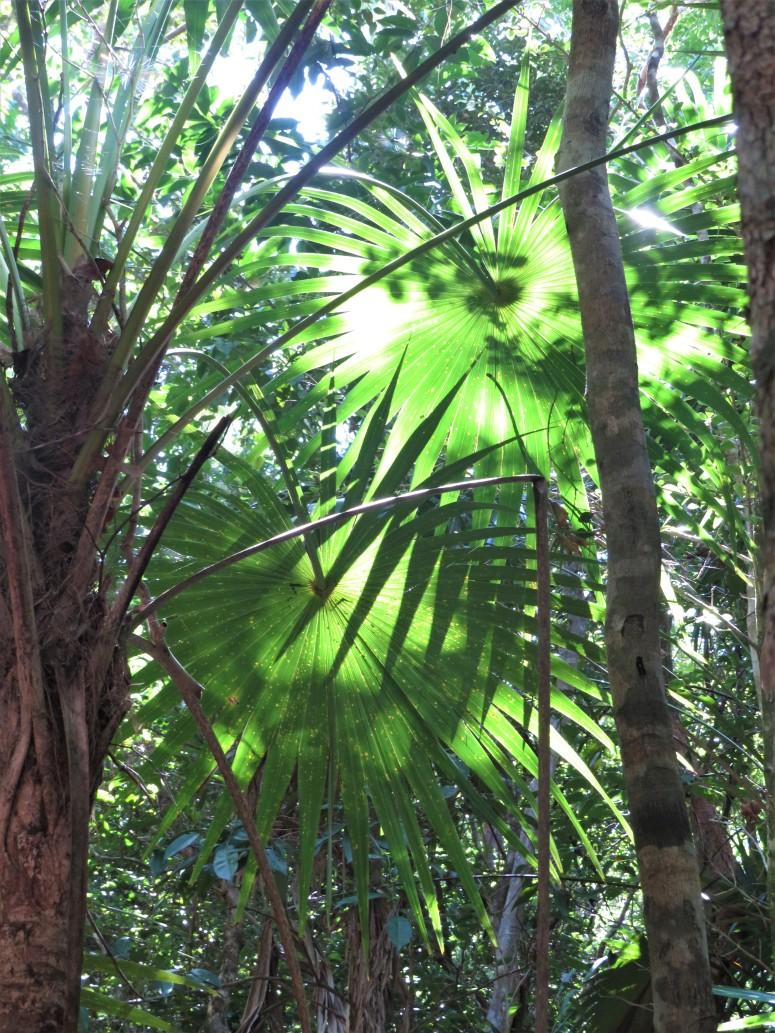 Belize Sarteneja Shipstern Nature Reserve 13