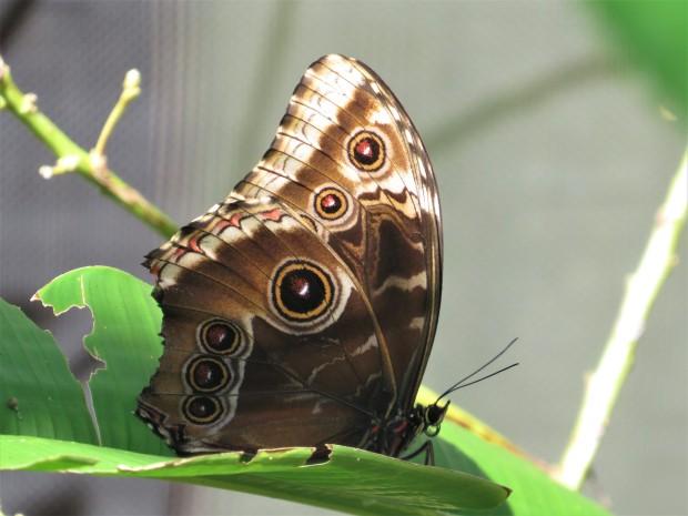 Belize Sarteneja Shipstern Nature Reserve 4