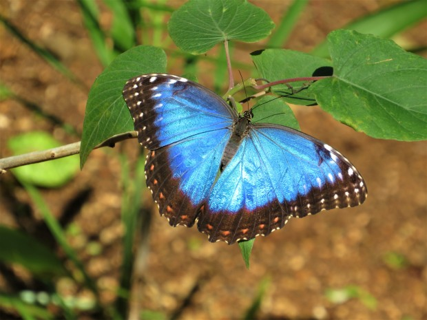 Belize Sarteneja Shipstern Nature Reserve 9