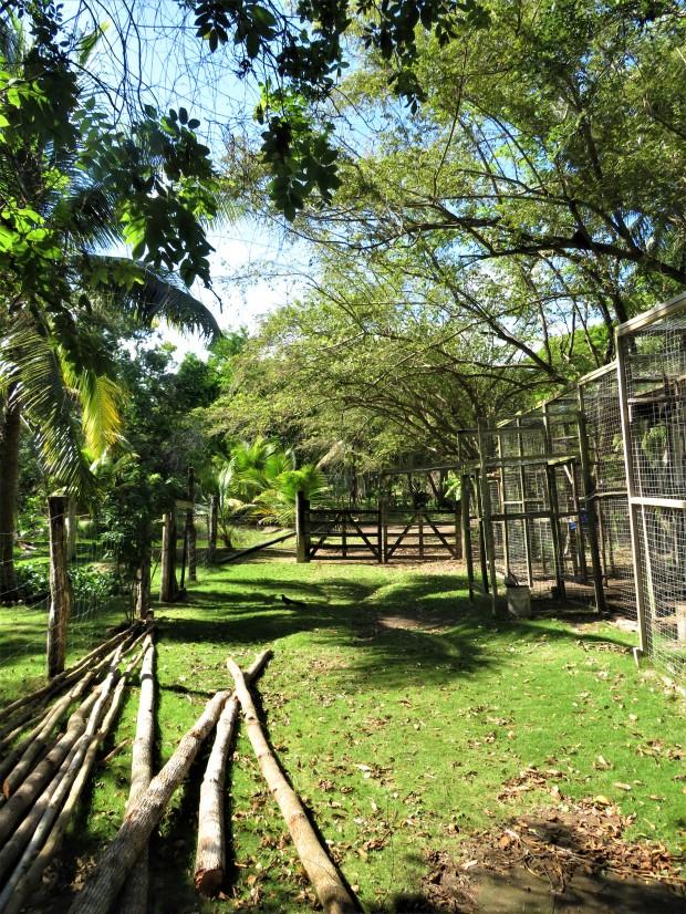 Belize Sarteneja Wildtracks 2
