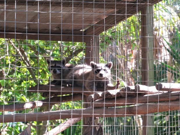 Belize Sarteneja Wildtracks 7