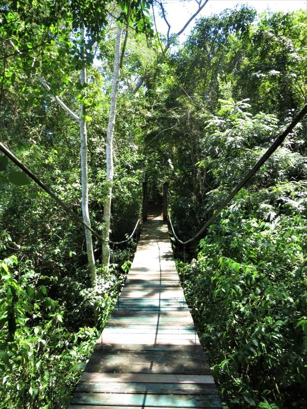 Belize San Ignacio Botanical Gardens 11